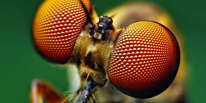 Scientists Draw Inspiration from Insect Eyes to Create New Solar Cell