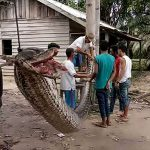 Indonesian Man survives fight with 23ft python (Photo)