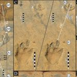 Scientists find 'first for Africa' dinosaur footprints in Lesotho