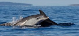 Whales & Dolphins Have Rich, 'Human-Like' Societies, says new research