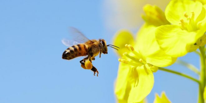 Bees can be left or right-handed like humans, says new research
