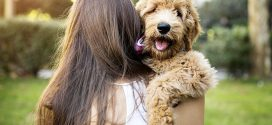 Dog ownership linked to lower mortality, says new study