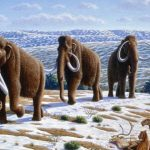 Male mammoths were good at falling in holes, says new research