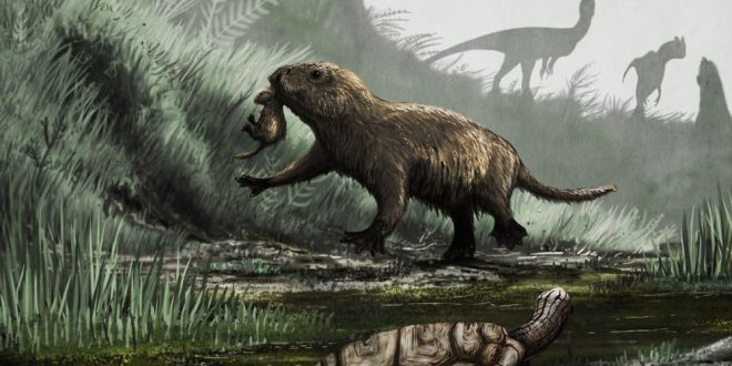 New Research: How the dinosaur-killing asteroid affected mammals