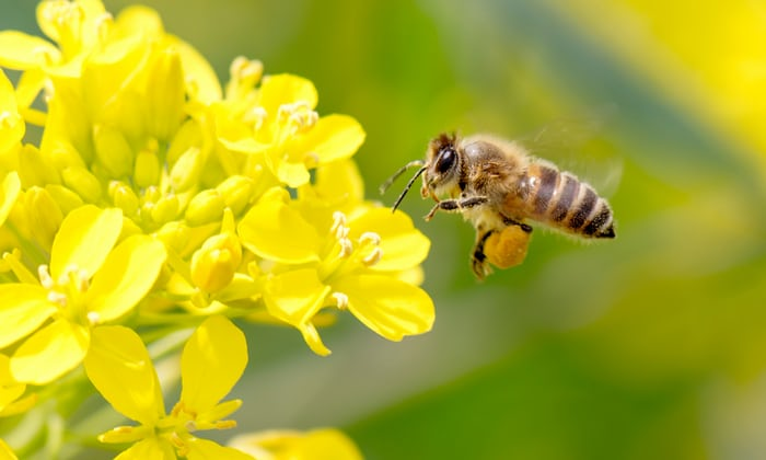 How Pollen Sticks to Bees – Static Electricity