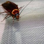 Research shows preferred spots for household insects
