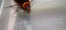 New research shows preferred spots for household insects