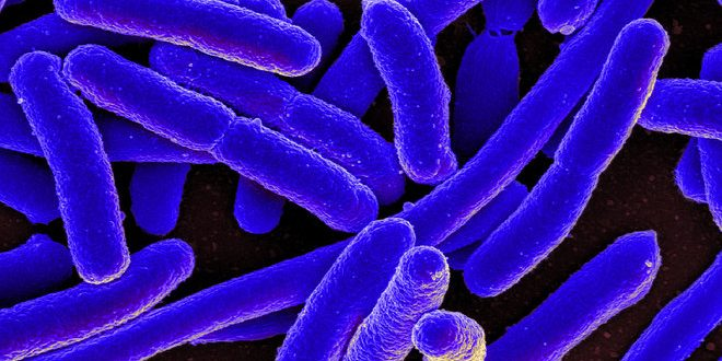 Researchers send E. coli bacteria to space for rare experiment