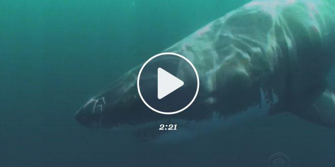 Shark attacks man on Pebble Beach (Video)