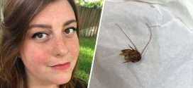 NOPE! Florida woman finds cockroach in her ear