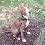 Washington dog found after nine days under rubble