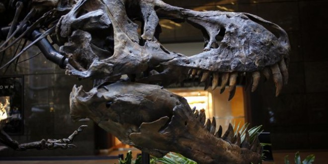 Dueling dinosaurs : fossil for auction in New York (VIDEO)