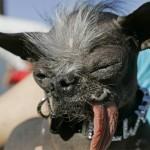 2007 World's Ugliest Dog Elwood dies suddenly