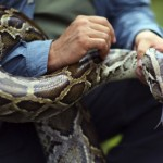 4-metre Python kills security guard in Bali hotel