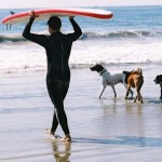 Loews Coronado Bay Resort surfing Dog Competition, coach