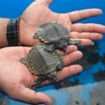 Over 8000 turtles Hidden in Suitcases