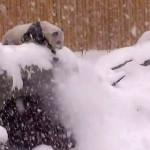 Da Mao playing in snow