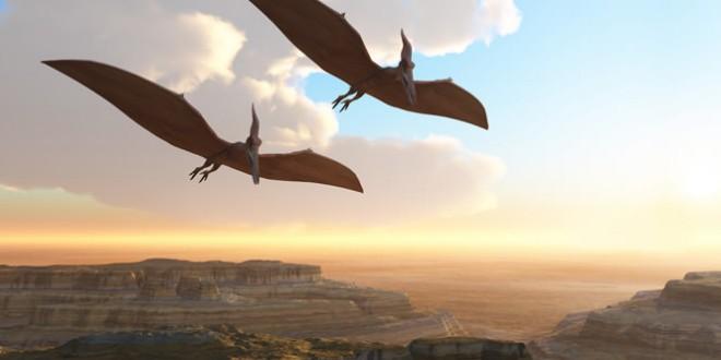 Kryptodrakon progenitor: Oldest fossils for line of flying reptiles found