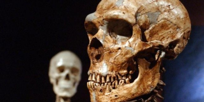 Neanderthals 'as clever as modern humans', Say Scientists