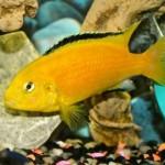 Fish reveal long-term memory span, scientists sayFish reveal long-term memory span, scientists say