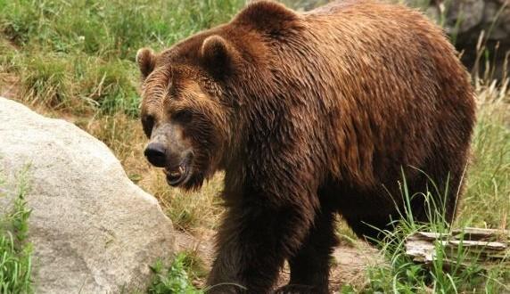Woman Mauled by Bear Drives Herself to Hospital