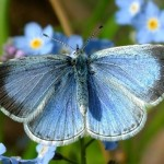 Butterflies need help, gardeners warn : Report