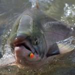 Algae bloom kills 280000 fish at B.C. salmon farm, Report