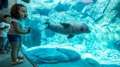 Vancouver Aquarium harbour seal dies after getting caught in drain