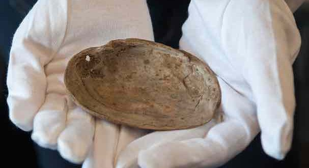 540000-Year-Old Shell Has Oldest Ever 'Art' (Video-Photo)