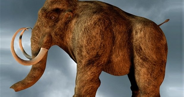 Researchers say mastodons were not hunted out of extinction
