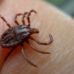 New Virus In Kansas : CDC Confirms One Dead From Newly Discovered Bourbon Virus