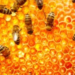 New KPU beekeeping program creates a buzz, Report