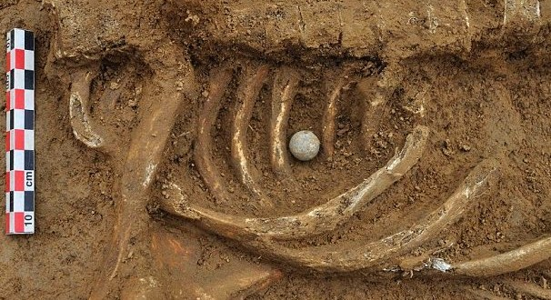 200 Year Old Skeleton Found : Archaeologist identified man who fought with British troops as Friedrich Brandt