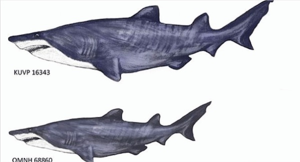 20-foot gigantic shark fossils found in Texas