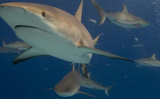 Shark Crash : Truck Bringing Sharks To New York Aquarium Crashes In Florida, One Shark Dead 'Video'