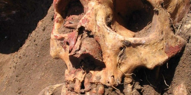Bronze Age plague wasn't spread by fleas, DNA study says