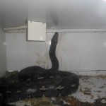 Kentucky python attacks Newport reptile shop owner