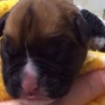 Cloned Puppy: Couple pays almost $100000 to clone late dog