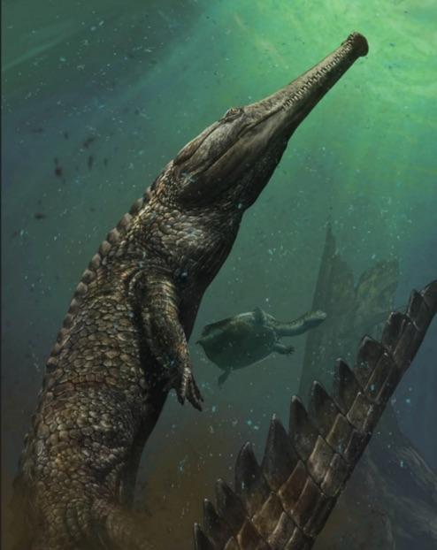 Machimosaurus Rex: 30-Foot Prehistoric Crocodile Lived In The Sahara (Video)