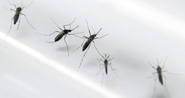 Zika in Europe: Danish hospital reports Zika virus case