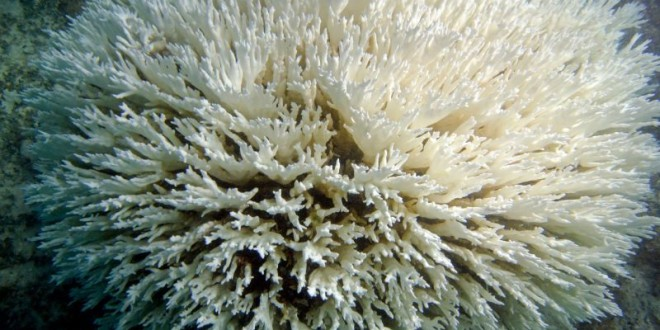 Coral reef die-off reaches record duration, says new Research
