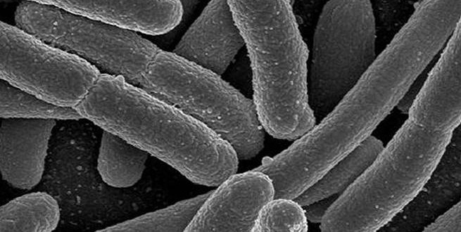 Right gut bacteria may protect against malnutrition, says new Research
