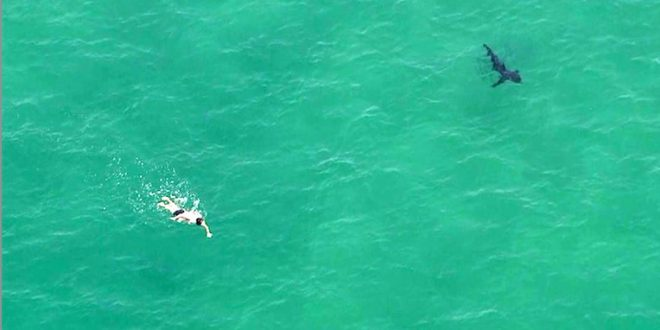Shark sightings prompt closure of two California beaches