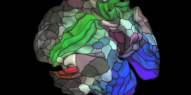 Brain map identifies 97 previously unknown regions, says new study