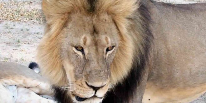 Granby Zoo: Lion mauls employee, quick action saves her life