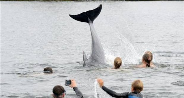 Friendly dolphin delights bathers in German canal (Video)