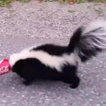 Man 'bravely' frees skunk with its head trapped in a can (Video)