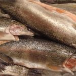 Whirling disease confirmed in upper Bow River, CFIA says
