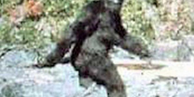 Bigfoot caught on camera? Eagle Cam Captures 'Unknown Figure' Under Nest (Video)