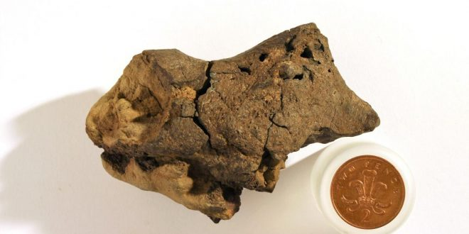 Scientists Claim to Have Found a Part of Fossilized Dinosaur Brain
